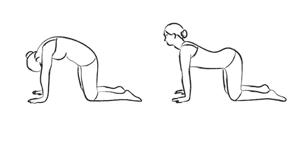 Yoga pose - Cat-Cow